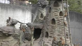 悠久山小動物園 (2019年4月6日)