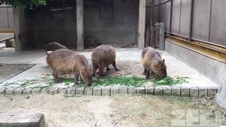 東武動物公園 (2017年7月15日)