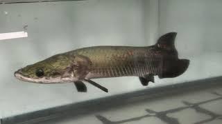 出の山淡水魚水族館 (2019年12月11日)