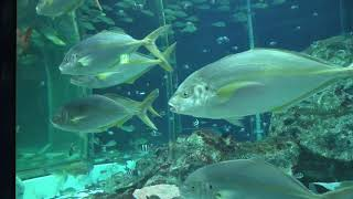 Ashizuri Kaiyokan Aquarium (December 22, 2019)