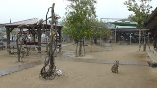 トリアスふれあい動物園 (2019年4月23日)