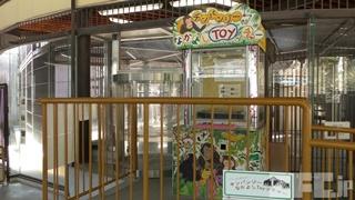 池田動物園 (2019年2月26日)