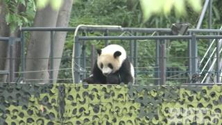 上野動物園 (2018年5月26日)