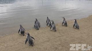 長崎ペンギン水族館 (2017年12月24日)