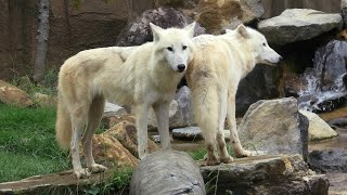 Nasu Animal Kingdom (September 14, 2020)