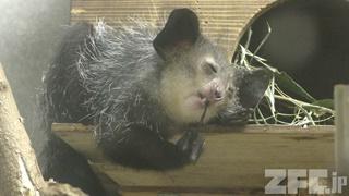 上野動物園・真夏の夜の動物園 (2018年8月10~16日)