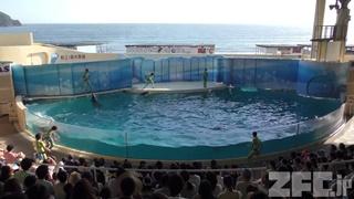 新江ノ島水族館 (2018年8月26日)