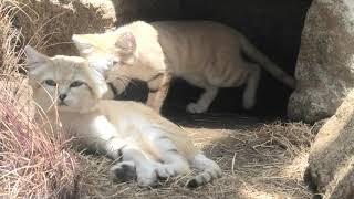 KOBE ANIMAL KINGDOM (June 24, 2020)