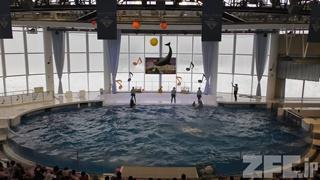 アクアワールド茨城県大洗水族館 (2017年10月21日)