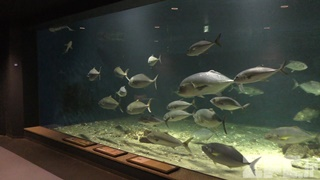京都大学 白浜水族館 (2018年12月24日)