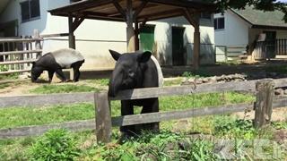 東武動物公園 (2017年5月20日)
