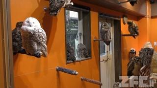 鳥のいるカフェ 谷中本店 (2018年12月11日)