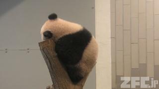 上野動物園 (2018年2月4日)
