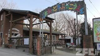 小豆島 銚子渓 自然動物園 お猿の国 (2019年2月27日)