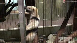上野動物園 (2017年8月9日)