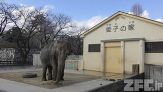 姫路市立動物園 (2019年2月16日)