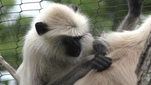 ときわ動物園 と 生息環境展示