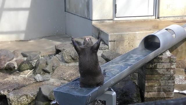 コツメカワウソ と動物園・水族館にできること