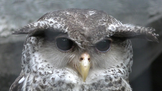 鳥綱 Aves