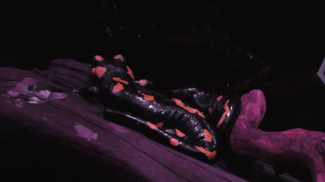 両生綱 Amphibia