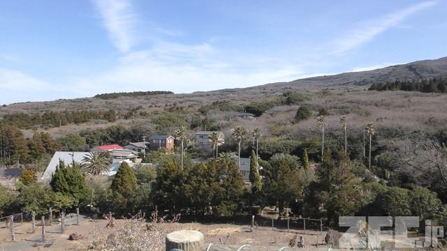 伊豆大島椿花ガーデン:旧リス村
