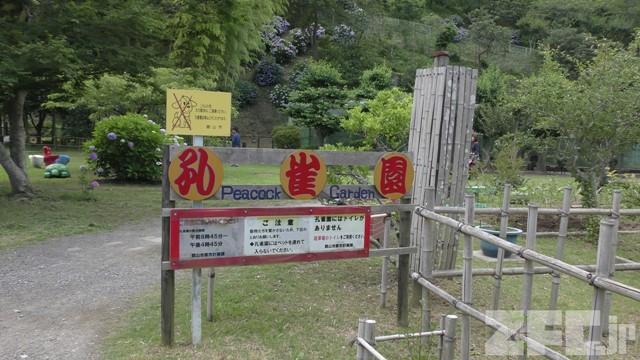 館山市城山公園 孔雀園