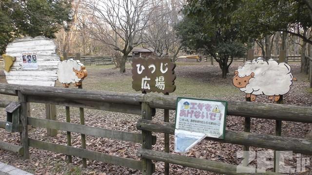 大泉緑地 ひつじ広場